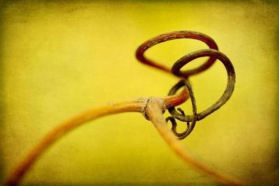 Vine Curl 2-Jessica Rogers-Stretched Canvas Print