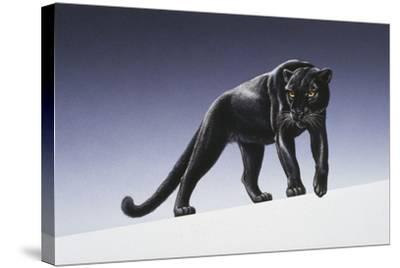 Black Panther-Harro Maass-Stretched Canvas Print
