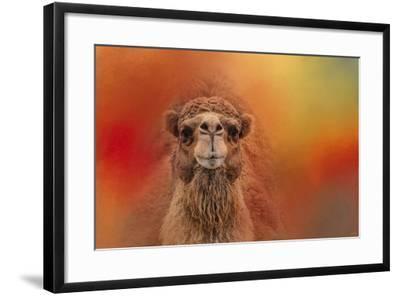 Dromedary Camel-Jai Johnson-Framed Giclee Print