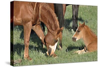 Wildhorses-Gordon Semmens-Stretched Canvas Print