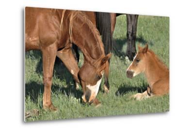 Wildhorses-Gordon Semmens-Metal Print