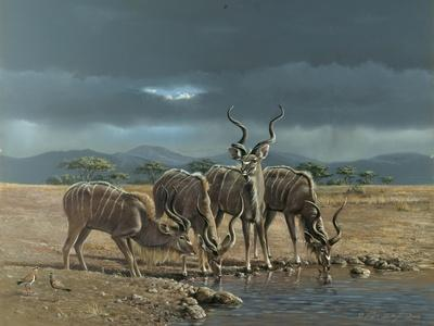 Greater Kudus-Harro Maass-Framed Giclee Print