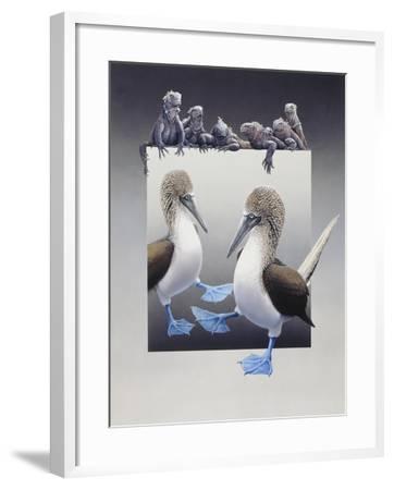 Bluefooted Boobies and Marine Iguanas-Harro Maass-Framed Giclee Print