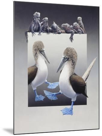 Bluefooted Boobies and Marine Iguanas-Harro Maass-Mounted Giclee Print