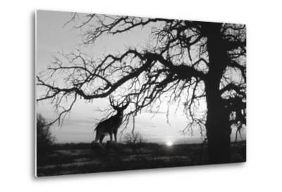 Silhouette 2-Gordon Semmens-Metal Print