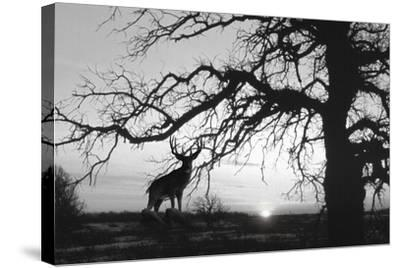 Silhouette 2-Gordon Semmens-Stretched Canvas Print