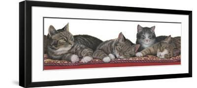 Tabbies White Background-Janet Pidoux-Framed Giclee Print