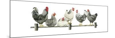 Hens, White Background-Janet Pidoux-Mounted Giclee Print