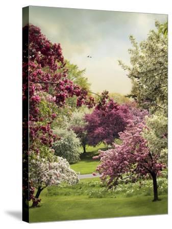 Cherry Tree Grove-Jessica Jenney-Stretched Canvas Print