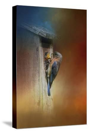 Baby Bluebird Breakfast-Jai Johnson-Stretched Canvas Print