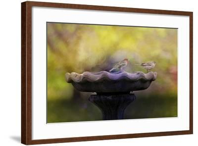Finches on the Bird Bath-Jai Johnson-Framed Giclee Print