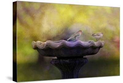 Finches on the Bird Bath-Jai Johnson-Stretched Canvas Print