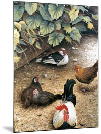Old Barnyard Chickens-Kevin Dodds-Mounted Giclee Print