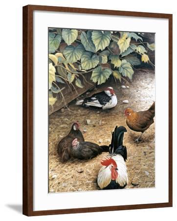 Old Barnyard Chickens-Kevin Dodds-Framed Giclee Print