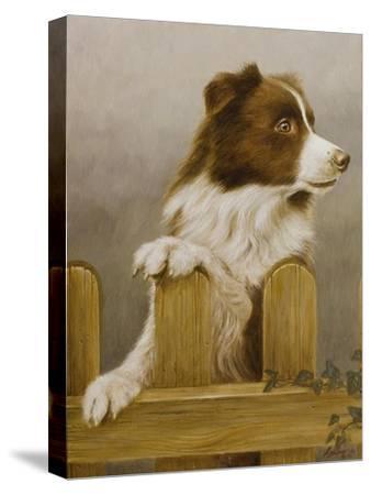 Australian Sheep Dog-John Silver-Stretched Canvas Print