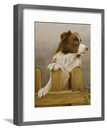 Australian Sheep Dog-John Silver-Framed Giclee Print