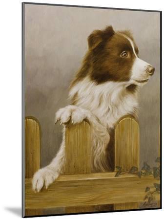 Australian Sheep Dog-John Silver-Mounted Giclee Print