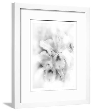 Orchid Magena-Maria Trad-Framed Giclee Print