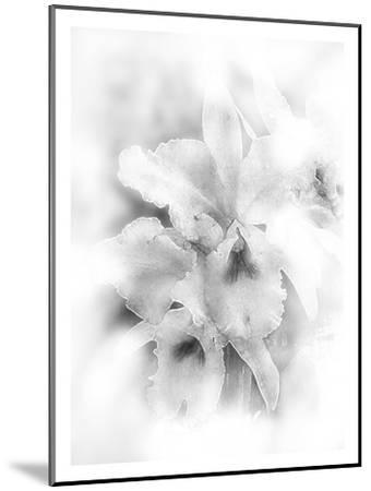 Orchid Magena-Maria Trad-Mounted Giclee Print