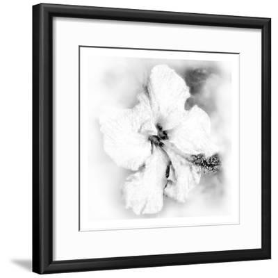 Hibiscus-Maria Trad-Framed Premium Giclee Print