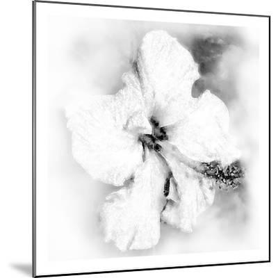 Hibiscus-Maria Trad-Mounted Premium Giclee Print