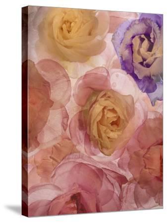 Rosas Compo 2-2-Moises Levy-Stretched Canvas Print