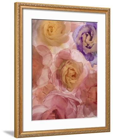 Rosas Compo 2-2-Moises Levy-Framed Giclee Print