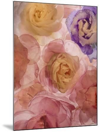 Rosas Compo 2-2-Moises Levy-Mounted Giclee Print