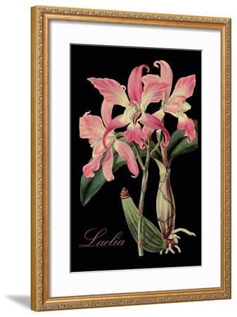 Laelia-Mindy Sommers-Framed Giclee Print
