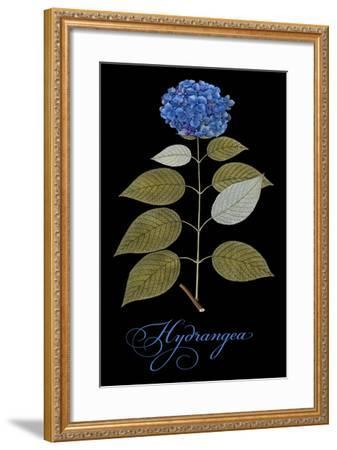 Hydrangea-Mindy Sommers-Framed Giclee Print