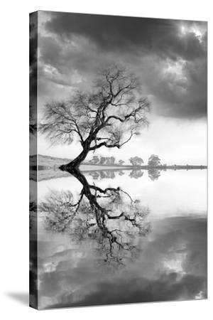 New Beginning Reflect-Moises Levy-Stretched Canvas Print