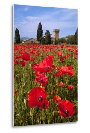 Poppies Close and Personal-Michael Blanchette-Metal Print