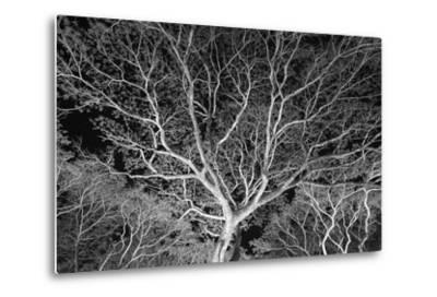 Costa Rica Tree-Moises Levy-Metal Print