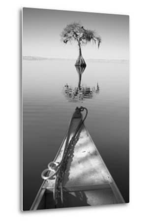 Alone with my Tree II-Moises Levy-Metal Print