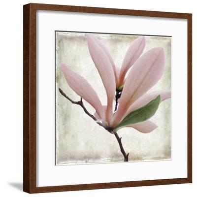 Petal Purity III-Mindy Sommers-Framed Giclee Print