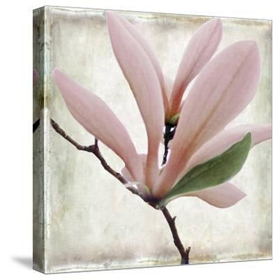 Petal Purity III-Mindy Sommers-Stretched Canvas Print
