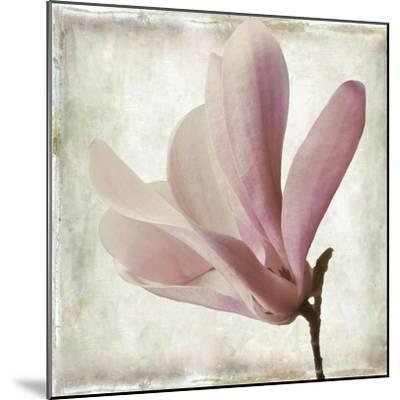 Petal Purity IV-Mindy Sommers-Mounted Giclee Print