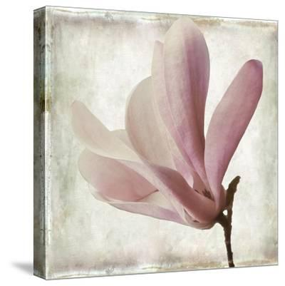 Petal Purity IV-Mindy Sommers-Stretched Canvas Print