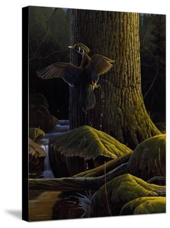 Magical Moment-Michael Budden-Stretched Canvas Print