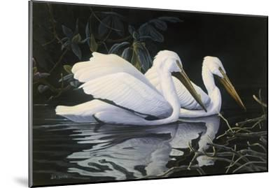 Pelicans-Michael Budden-Mounted Giclee Print