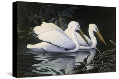 Pelicans-Michael Budden-Stretched Canvas Print