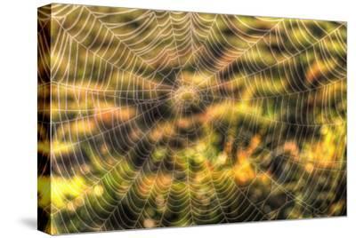 Morning Web-Robert Goldwitz-Stretched Canvas Print
