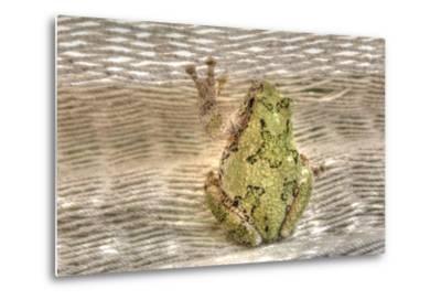 Tree Frog-Robert Goldwitz-Metal Print