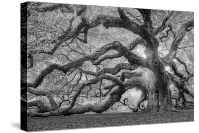 Tree of Light BW FL-Moises Levy-Stretched Canvas Print