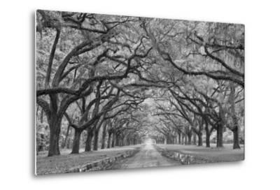Oaks Avenue 1 BW-Moises Levy-Metal Print