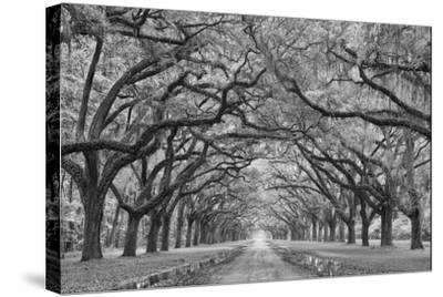 Oaks Avenue 1 BW-Moises Levy-Stretched Canvas Print