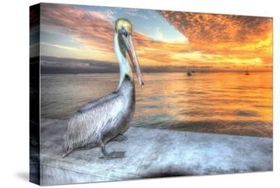 Pelican and Fire Sky-Robert Goldwitz-Stretched Canvas Print