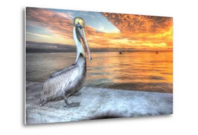 Pelican and Fire Sky-Robert Goldwitz-Metal Print