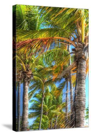Palms Vertical-Robert Goldwitz-Stretched Canvas Print