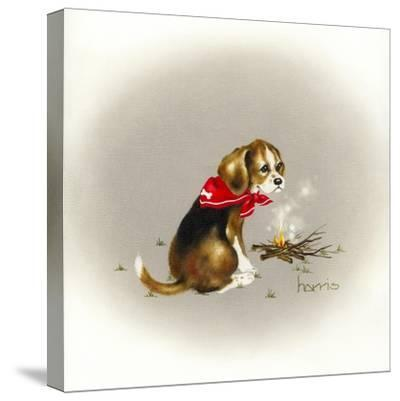 Beagle Scout-Peggy Harris-Stretched Canvas Print